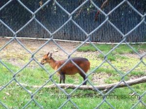 paddock zoo 2