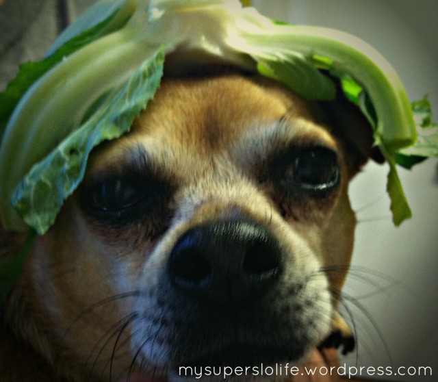 izzy cauliflower crown